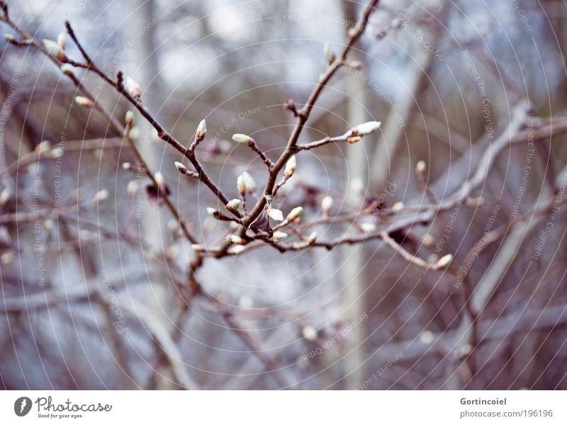 Looks like Winter Natur schön Baum Pflanze Wald kalt Blüte Frühling grau Park Umwelt Wachstum Sträucher violett Lebensfreude