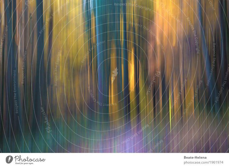 Transzendenz | alles strebt nach oben Natur blau Farbe grün Baum Landschaft Erholung Wald Leben gelb Herbst Wege & Pfade außergewöhnlich Stimmung leuchten