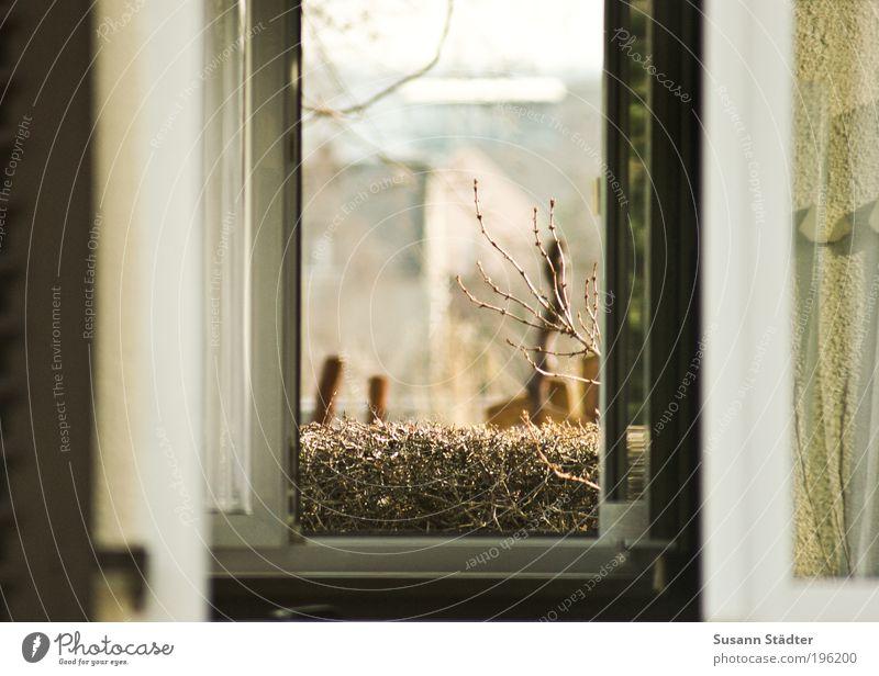 Durchzug Pflanze Tier Ferne kalt Landschaft Garten Energiewirtschaft Ordnung Fenster Romantik Sträucher Ast Wohnzimmer atmen Fensterscheibe Hecke