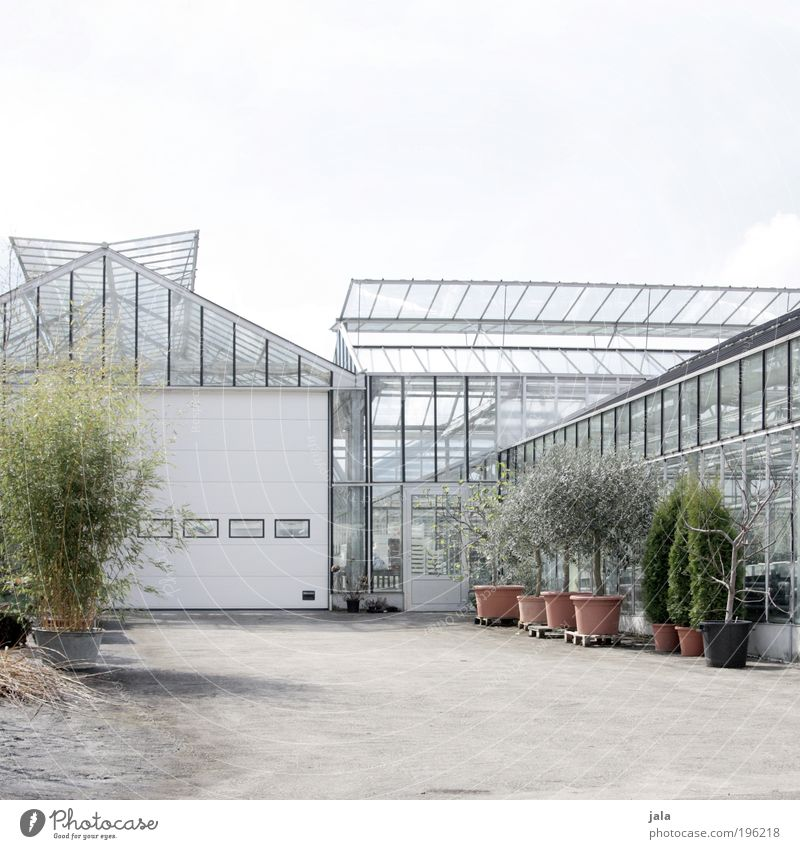 gärtnerei weiß Baum Pflanze Gebäude hell Architektur Glas Sträucher Sauberkeit Beruf Tor Landwirtschaft Bauwerk Arbeitsplatz Gras Gartenarbeit