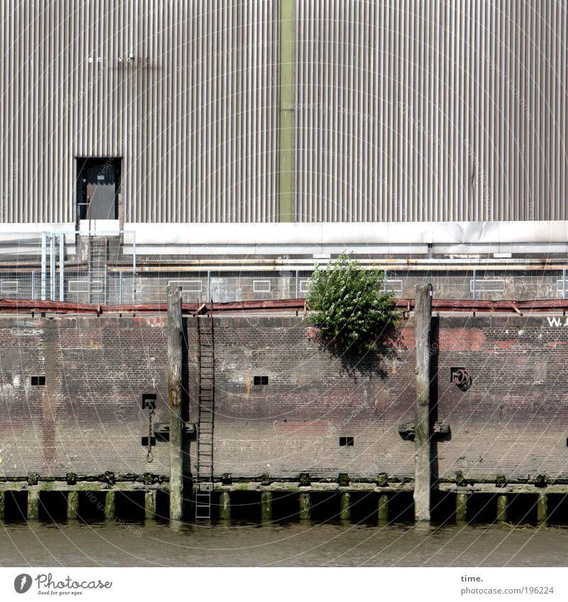 Siesta im Hafen Wasser Wand grau Stein Mauer Metall Tür Hamburg Sträucher Hafen Anlegestelle Leiter Lagerhalle Schönes Wetter Flussufer Scheune