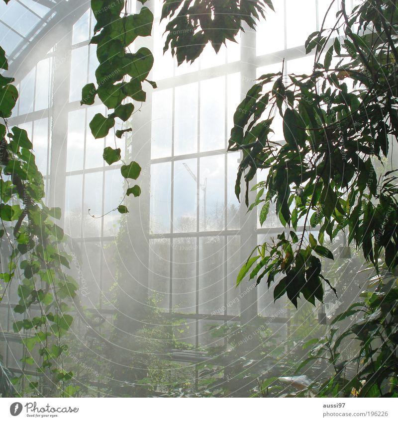 gärtnerei von innen Gärtnerei Gewächshaus Botanik Pflanzen Wachstum Luftfeuchtigkeit