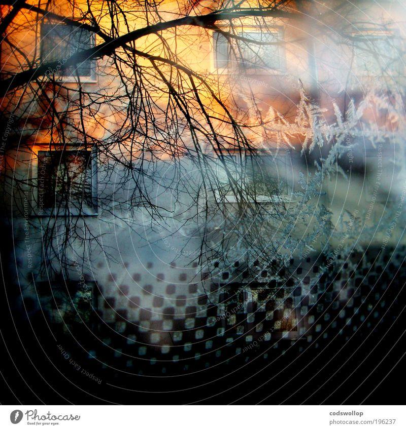 morning glory Haus Fassade Fenster außergewöhnlich Surrealismus Häusliches Leben Doppelbelichtung Baum Muster Sonnenaufgang Eis Winter 500 kalt Mehrfamilienhaus