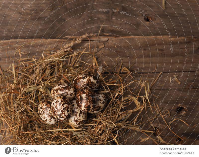 """Osternest auf Holztisch Leben Natur alt Hintergrundbild Nest Protein Symbole & Metaphern """"osternest ostereier,"""" Osterei Stroh Vogelperspektive Osterdekoration"""