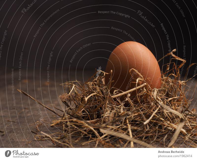 Bio Ei im Stroh Lebensmittel Ostern Natur springen brown color colorful decoration diet easter eat eggs food fresh hay healthy holiday ingredient natural Nest