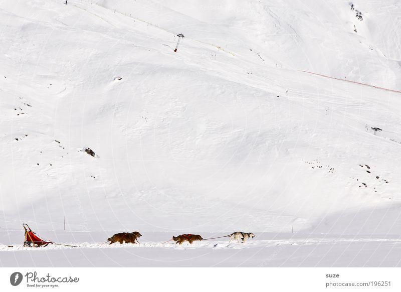 Auf, auf und davon ... Hund Ferien & Urlaub & Reisen weiß Tier Winter Berge u. Gebirge kalt Schnee Bewegung lustig hell Eis Geschwindigkeit Abenteuer Tiergruppe