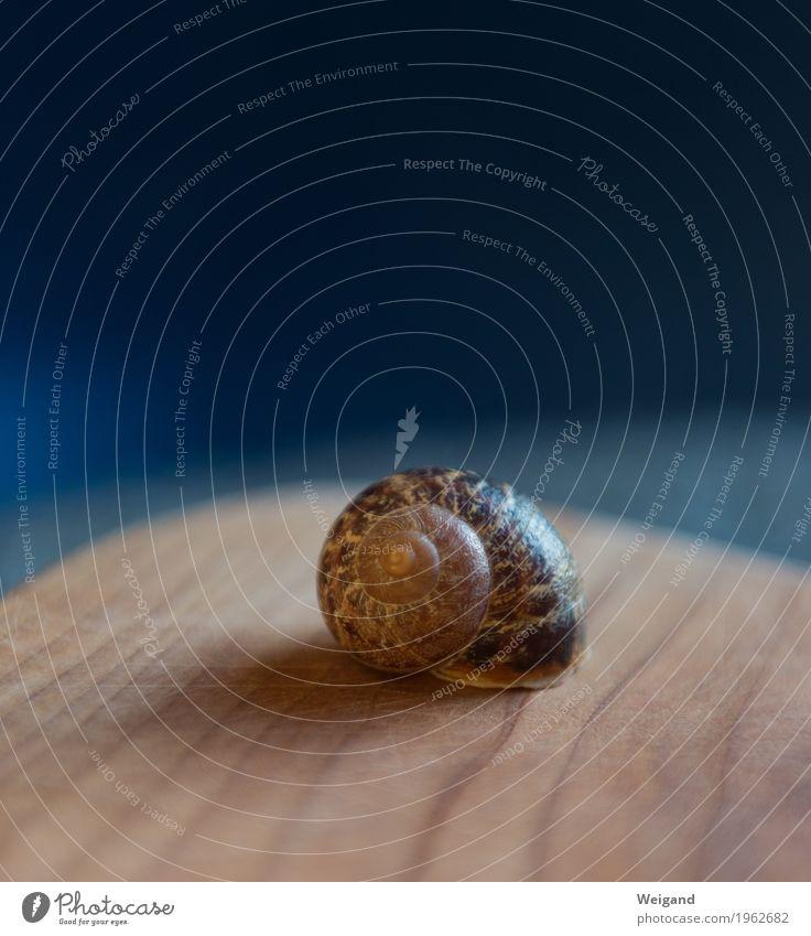Schneckenhaus Gesundheit Wohlgefühl Zufriedenheit Sinnesorgane Erholung ruhig Meditation Holz alt ästhetisch rund blau Spiritualität achtsam Weisheit Labyrinth