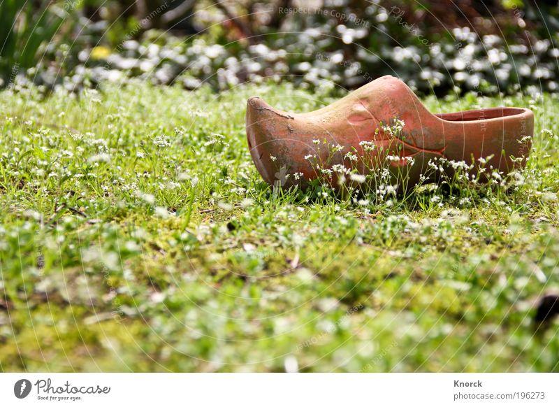 Tonschuh Blume grün Einsamkeit Gras Schuhe braun Müdigkeit Langeweile bequem Ton