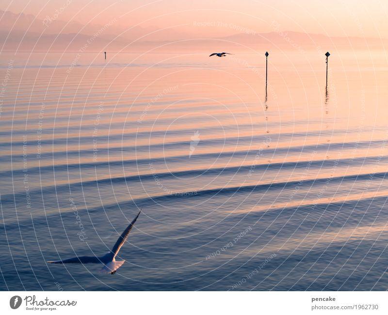 übersee Himmel Natur Wasser Landschaft Tier Winter See Vogel fliegen oben Zusammensein Wellen fantastisch Hinweisschild Urelemente Unendlichkeit