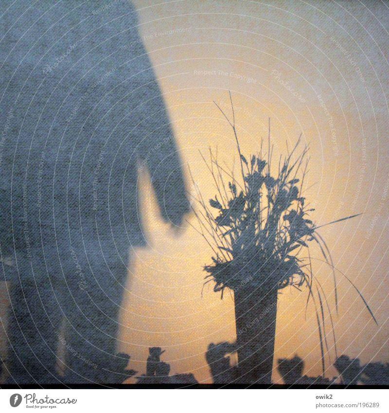 Flauer Bauer Mensch Pflanze Blume Blatt Wand Blüte Bewegung Mauer gehen stehen Blumenstrauß ausgehen Schattenspiel Leinwand Projektionsleinwand Gegenlicht