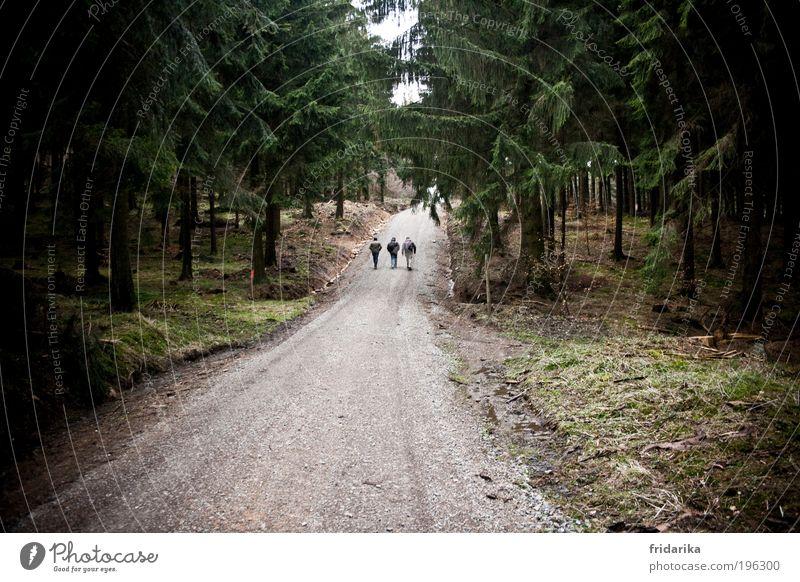 das wandern ist des müllers lust, das wa-an-dern! Mensch Baum grün ruhig Ferne Wald oben grau Wege & Pfade Freundschaft braun Kraft gehen Geschwindigkeit