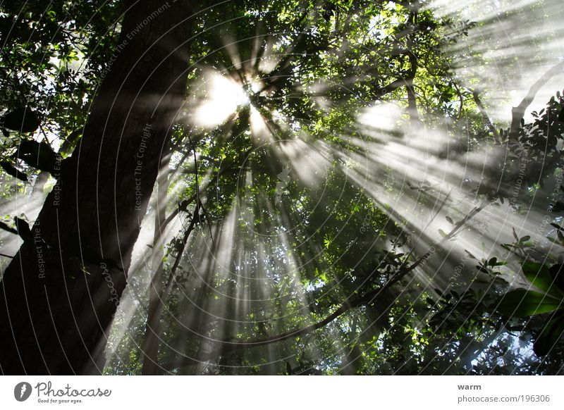 Sonnenstrahlen im Nebelwald Natur Baum Pflanze Sommer ruhig Wald Umwelt Luft Nebel Schönes Wetter Urwald Mittelamerika Costa Rica