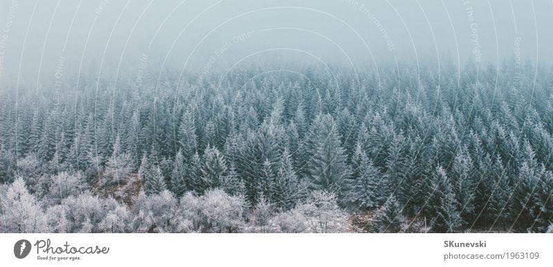 Kiefernwald im Winter. schön Ferien & Urlaub & Reisen Schnee Berge u. Gebirge Umwelt Natur Landschaft Pflanze Erde Himmel Wolken Wetter Nebel Baum Park Wald