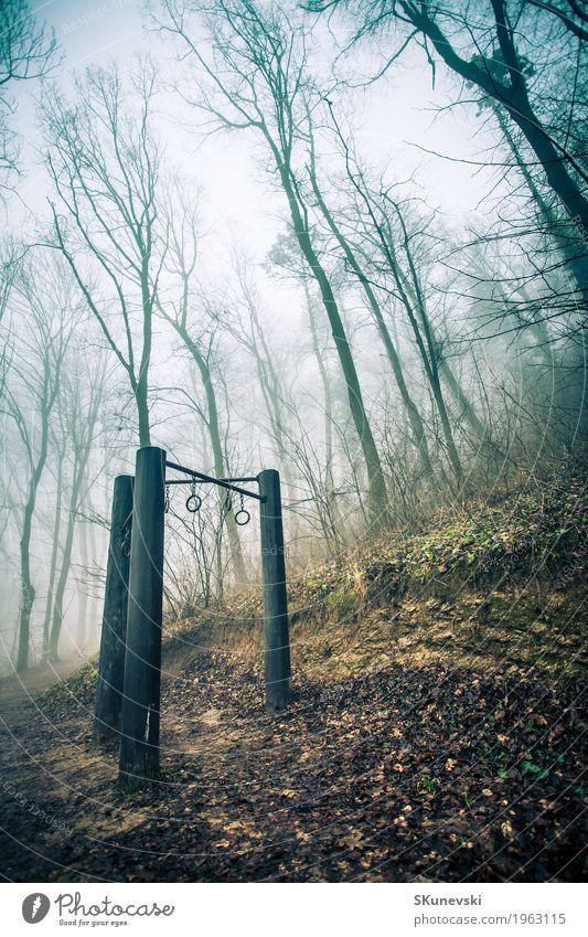 Übungsausrüstung im nebelhaften Wald auf Gesundheitspfad. exotisch schön Winter Tapete Umwelt Natur Landschaft Pflanze Erde Nebel Baum Blatt Urwald Hügel