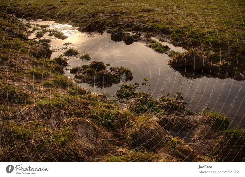 offroad Natur Wasser schön Ferien & Urlaub & Reisen Pflanze Sonne Sommer Erholung Umwelt Wiese Wärme Gras Feld dreckig nass Ausflug