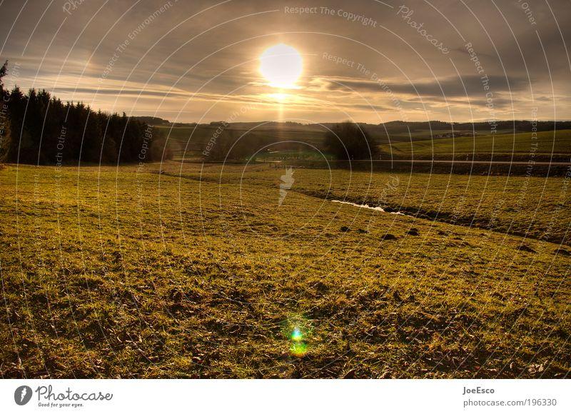 unterwegs... Himmel Natur schön Baum Ferien & Urlaub & Reisen Pflanze Sonne Sommer Ferne Umwelt Landschaft Wiese Freiheit Gras Zufriedenheit Feld