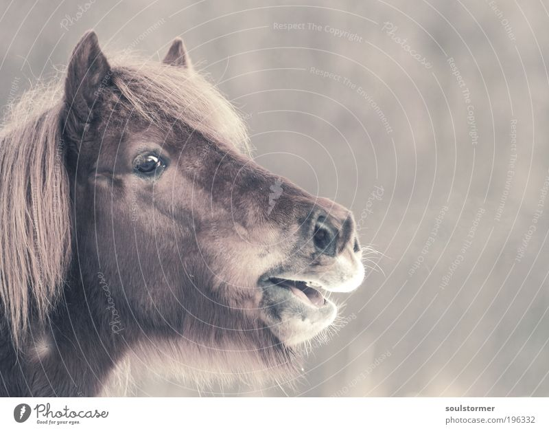 Der Ruf nach Freiheit Natur Einsamkeit Tier Freiheit Traurigkeit Pferd Tiergesicht schreien atmen Sorge Nervosität Zukunftsangst Nutztier Angst Cross Processing Gelbstich