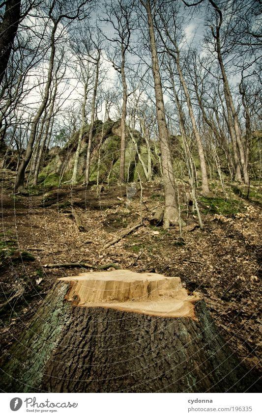 Einer weniger Landwirtschaft Forstwirtschaft Umwelt Natur Landschaft Baum Wald Felsen Berge u. Gebirge Einsamkeit Ende Erfahrung Idee Leben nachhaltig ruhig Tod