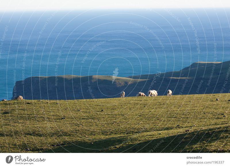 New Zealand XXIV Natur Wasser Himmel Meer Pflanze Ernährung Tier Erholung Wiese Gras Frühling Landschaft Feld Küste Lebensmittel Wetter