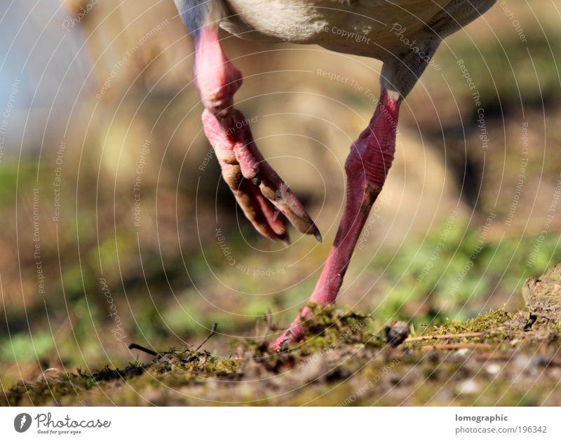 180° Umluft Natur Sommer Tier Erde laufen wandern frei rennen Flugzeug Geschwindigkeit verrückt Spaziergang Ente Pfote Tierfuß Krallen