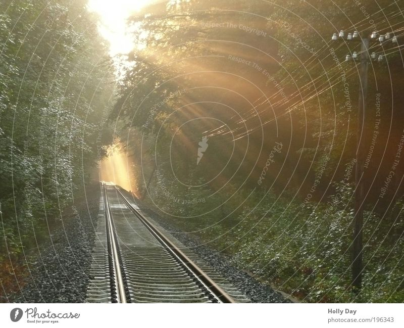 Breakthru Güterverkehr & Logistik Strommast Natur Luft Sonne Sonnenaufgang Sonnenuntergang Sonnenlicht Sommer Nebel Baum Wald Verkehr Verkehrswege