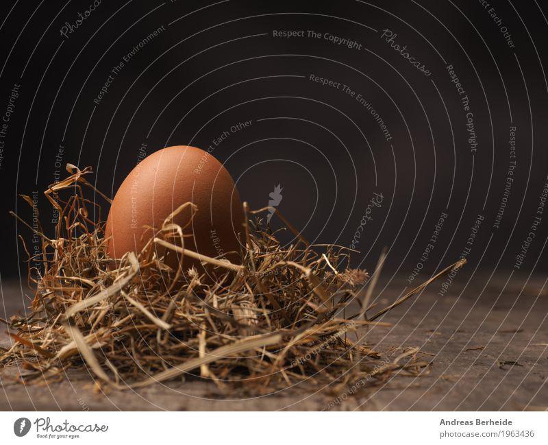 Hühnerei im Strohnest Natur Leben Hintergrundbild Lebensmittel springen Ostern Symbole & Metaphern Bioprodukte Nest Protein