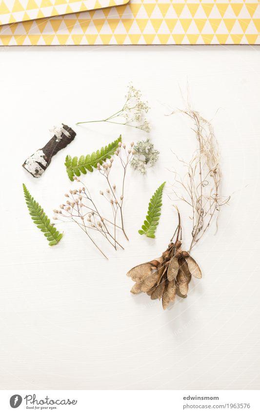 Fundstücke Natur Pflanze Wildpflanze Gras Wald Dekoration & Verzierung Sammlung Holz wählen entdecken lernen authentisch natürlich braun grün weiß Inspiration