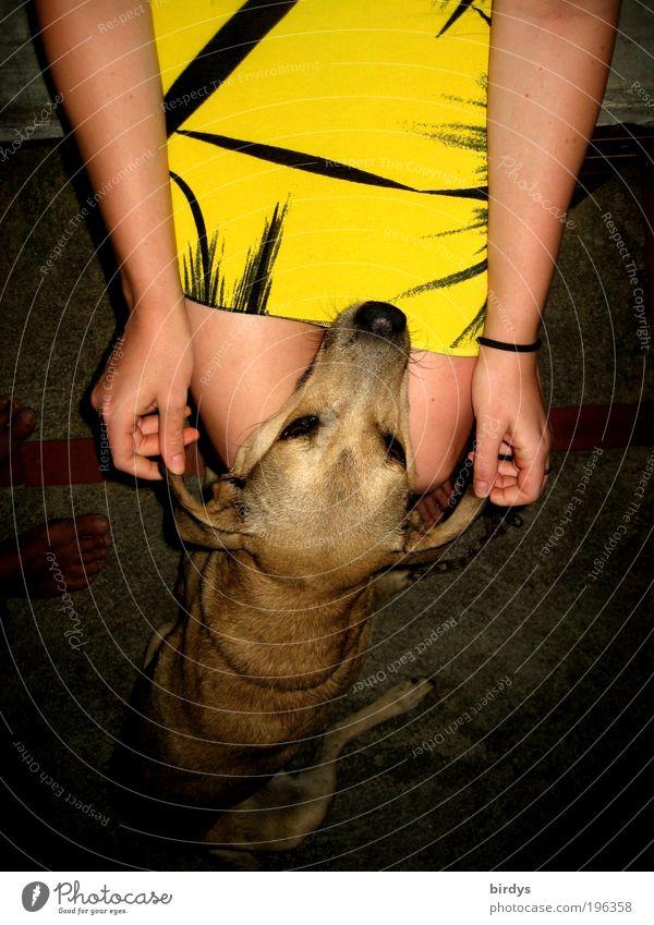 Ich liebe schwarz-gelb......und die Mieze die das trägt ! Mensch Jugendliche Sommer Tier feminin Gefühle Stil Glück Hund Beine Erwachsene ästhetisch Ohr
