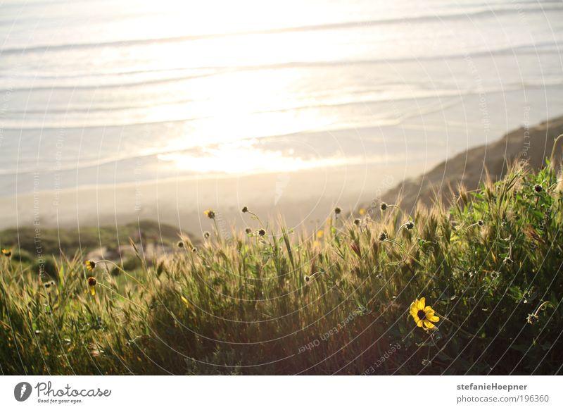 beach flowers Natur Wasser Pflanze Sonne Sommer Strand Ferien & Urlaub & Reisen Meer Blume Ferne Erholung Freiheit Umwelt Frühling Küste Stimmung
