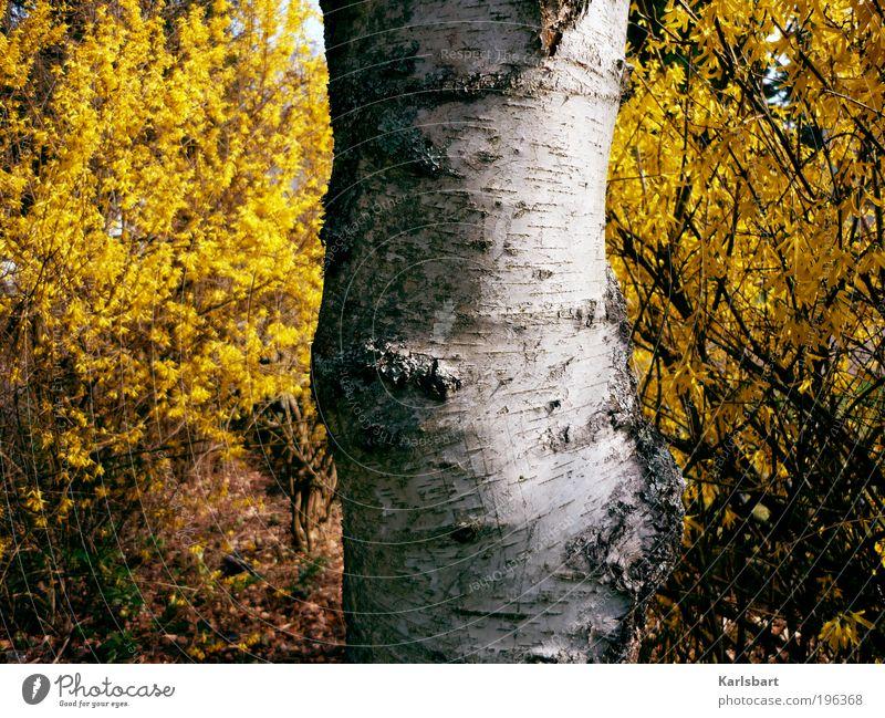 birk. Lifestyle Stil Design Ausflug Freiheit Landwirtschaft Forstwirtschaft Werbebranche Umwelt Natur Pflanze Frühling Sommer Schönes Wetter Baum Sträucher