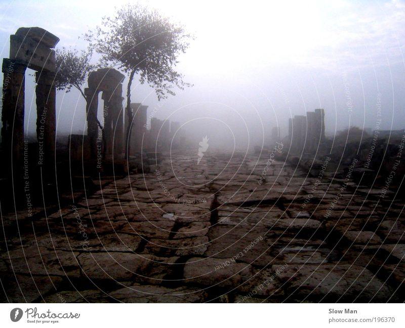 stille.. Pflanze Baum ruhig Wege & Pfade Freiheit Felsen Nebel Vergänglichkeit fantastisch geheimnisvoll Burg oder Schloss Vergangenheit gruselig Verfall Ruine