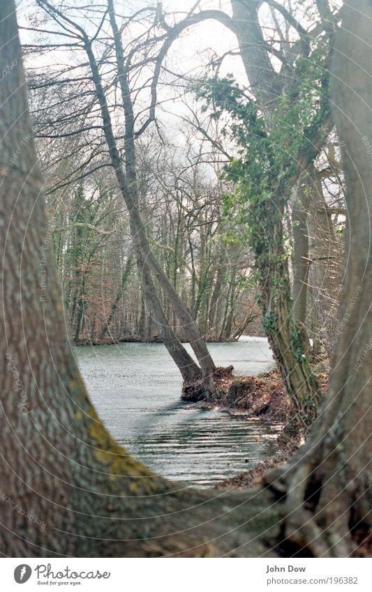 Nach der Schneeschmelze Landschaft Pflanze Baum Sträucher Moos Park Seeufer natürlich Zufriedenheit Frühlingsgefühle Gelassenheit einzigartig Erholung Hoffnung