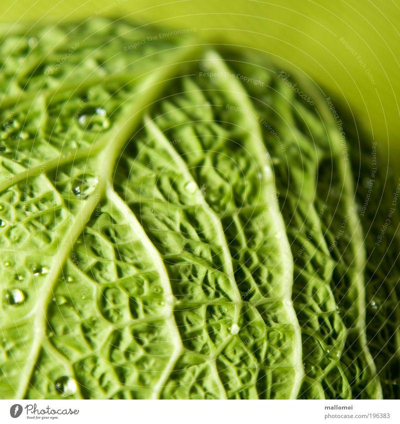 benetzt Lebensmittel Gemüse Wirsing Bioprodukte Vegetarische Ernährung Umwelt Wassertropfen Kugel frisch Gesundheit lecker grün Lebenslinie Gefäße Kohlgewächse