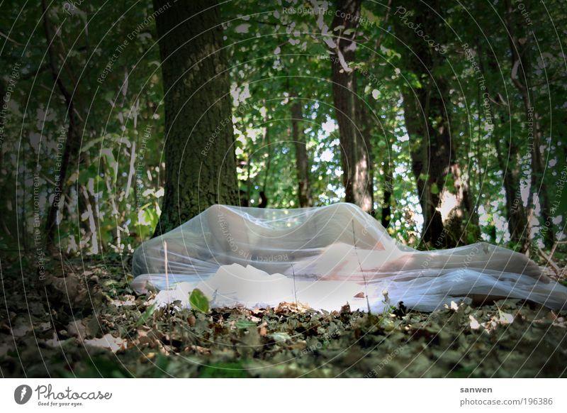 erwacht feminin Frau Erwachsene Natur Wald blond frieren liegen schlafen träumen ästhetisch Erotik exotisch nackt dünn schön Erholung Farbfoto Außenaufnahme Tag