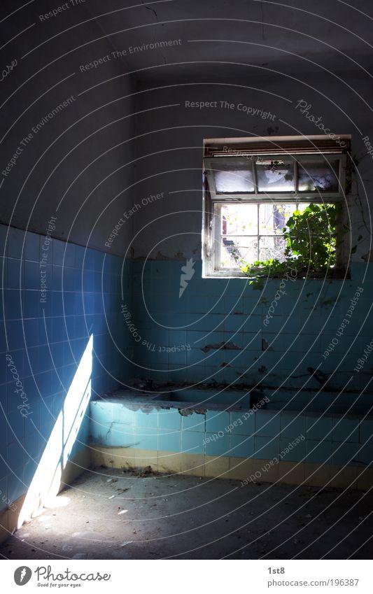 Badeanstalt blau weiß Pflanze Blatt schwarz Haus Fenster Architektur Gebäude dreckig authentisch Zukunft einzigartig Sauberkeit