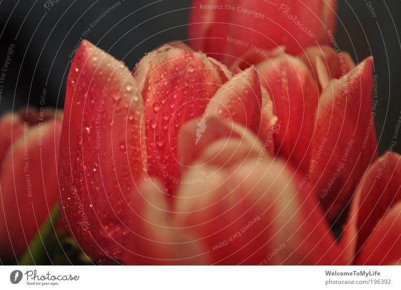 Blumenstrauss schön grün Pflanze rosa nass Blühend