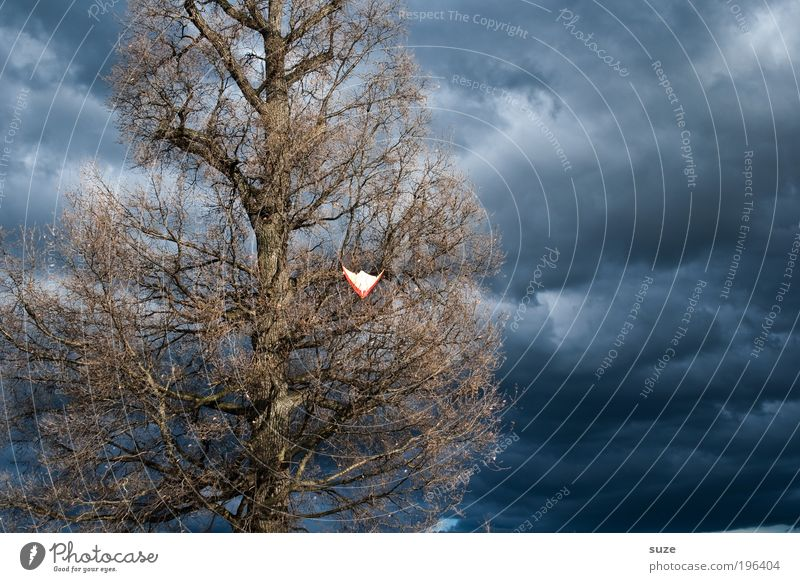Drachenbaum Freizeit & Hobby Spielen Kinderspiel Himmel Herbst Unwetter Wind Sturm Gewitter Baum hängen Traurigkeit dunkel blau Desaster verlieren