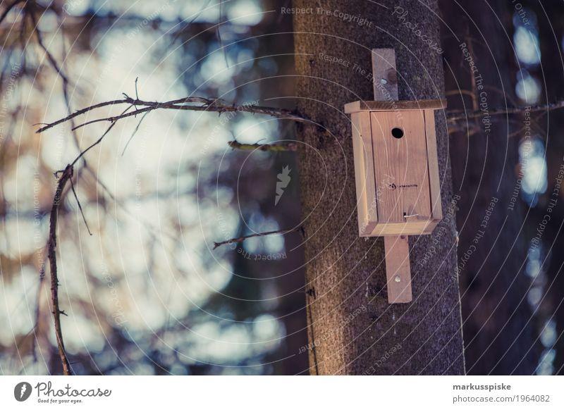 vogelhäuschen Natur Pflanze Baum Landschaft Tier Umwelt Herbst Wiese Garten Vogel fliegen Wohnung Freizeit & Hobby Häusliches Leben Park ästhetisch