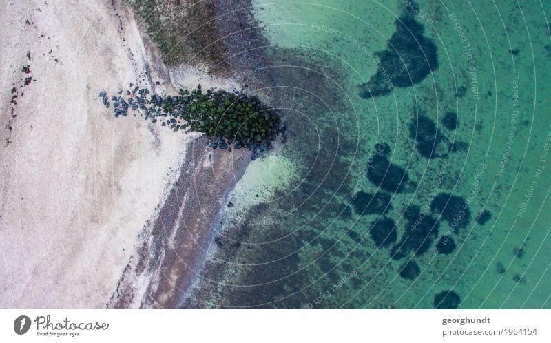 Ein Steintier flüchtet ins Meer 2 Natur Ferien & Urlaub & Reisen Wasser Landschaft Ferne Winter Strand Umwelt Leben Küste Freiheit Schwimmen & Baden Tourismus
