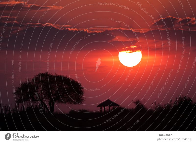 Sonnenuntergang in Afrika Ferien & Urlaub & Reisen Ferne Freiheit Safari Natur Landschaft Himmel Wolken Sonnenaufgang Sommer Schönes Wetter Wärme Baum Wiese