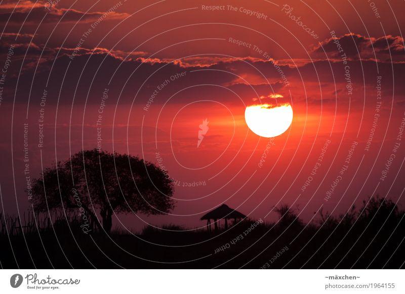Sonnenuntergang in Afrika Himmel Natur Ferien & Urlaub & Reisen Sommer schön Baum Landschaft rot Erholung Wolken ruhig Ferne Wärme Wiese Freiheit