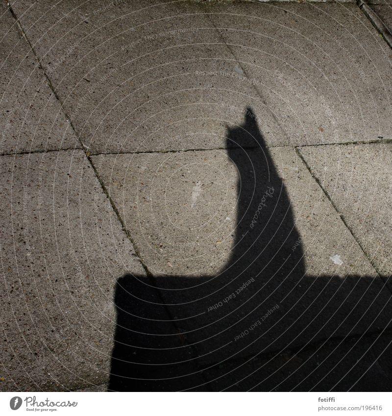 miii.... schön schwarz Tier Wand grau träumen Mauer Katze sitzen Gelassenheit genießen Kopfsteinpflaster Schönes Wetter Haustier Stolz hocken