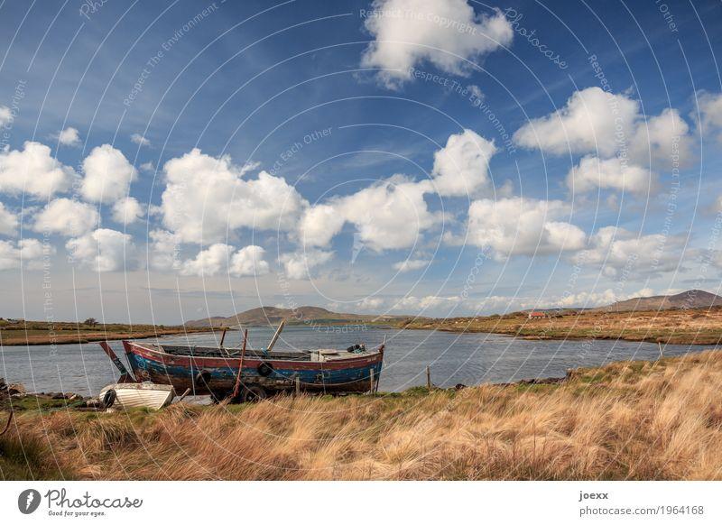 Großer Bruder Natur Landschaft Pflanze Himmel Wolken Schönes Wetter Wiese Insel Republik Irland Fischerboot Ruderboot liegen alt blau braun weiß Horizont Idylle