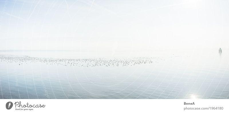 Vogelschwarm schwimmt auf dem Bodensee in der gleissenden Sonne harmonisch Erholung ruhig Schwimmen & Baden Ferien & Urlaub & Reisen Freiheit Natur Landschaft