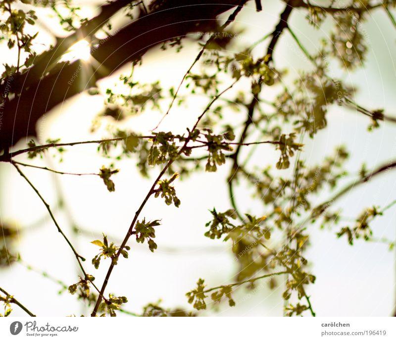 glücklicht Himmel Natur weiß grün Baum Pflanze Sonne Tier Blatt Umwelt Landschaft gelb Frühling Park Schönes Wetter Morgen