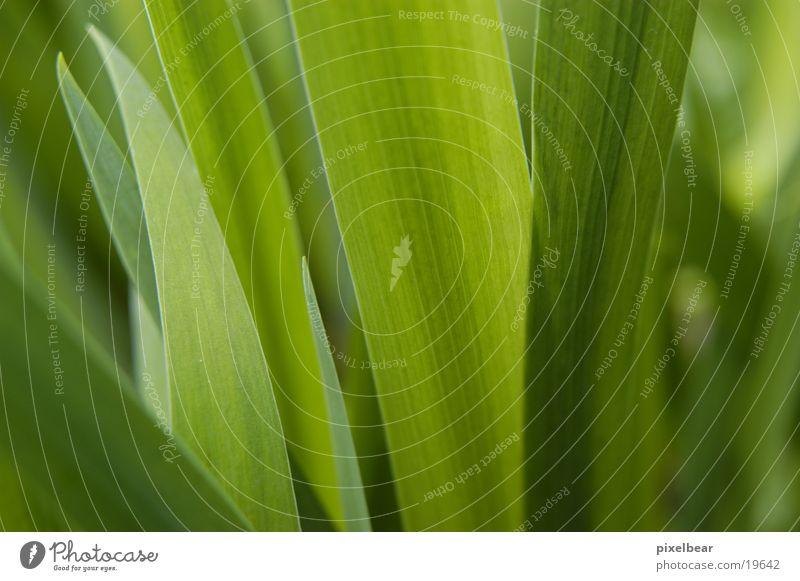 Grünes Natur grün Blatt Garten