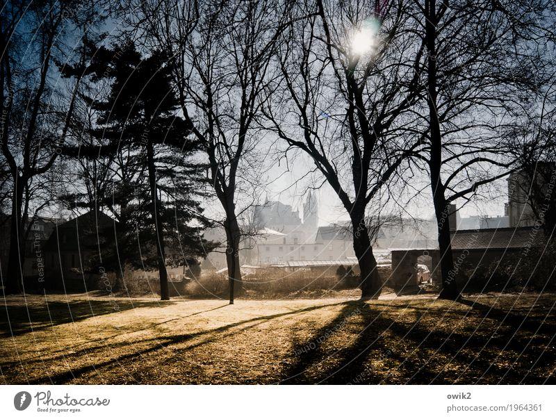 Am Stadtwall alt Baum Landschaft Haus Winter Umwelt Wiese Gras Deutschland Horizont Park leuchten Idylle Schönes Wetter historisch Wolkenloser Himmel