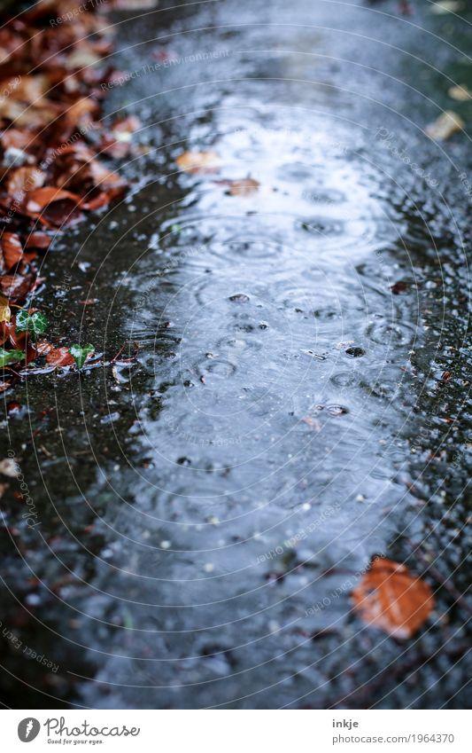 durchwachsen Umwelt Wasser Herbst Klima Wetter schlechtes Wetter Regen Blatt Bach Kreis nass Natur Nieselregen Farbfoto Außenaufnahme Nahaufnahme Menschenleer