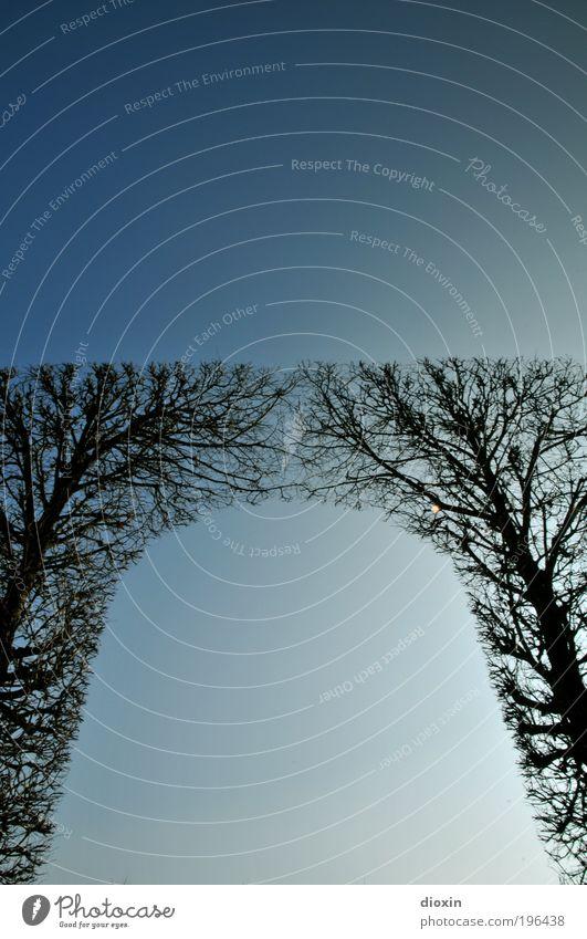 come together Natur Himmel blau Pflanze Winter Park Wetter Umwelt groß hoch Wachstum Sträucher Klima Ast Baum Baumstamm