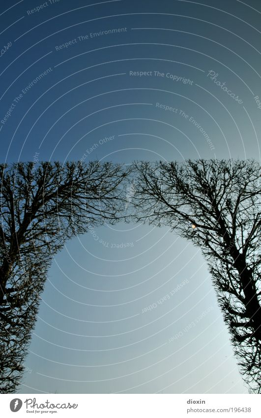 come together Umwelt Natur Pflanze Himmel Wolkenloser Himmel Sonnenlicht Winter Klima Wetter Schönes Wetter Sträucher Park Wachstum groß hoch blau Zusammenhalt